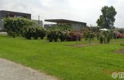 Pillnitzer-Gartentag-2013-51